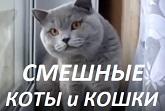 Смешные кошки 2017